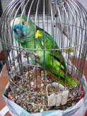 cvme urgencias aves