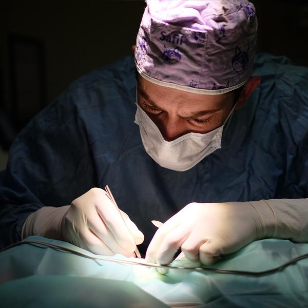 cirugía-centro-veterinario-madrid-exoticos